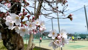嵐山テニススクール